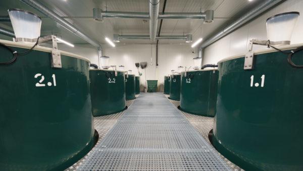 Dodávky odchovných a filtračních nádrží pro FTN Aquaart AG
