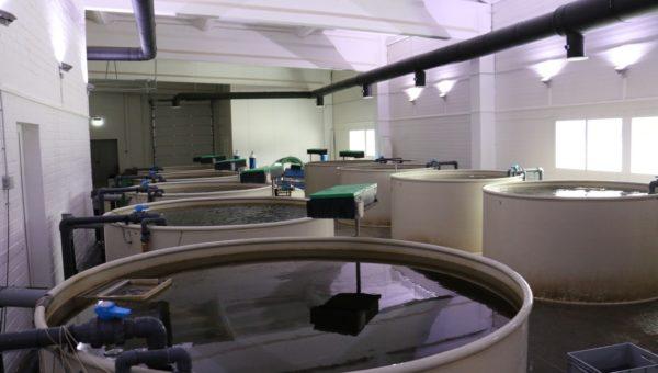Dodávka technologie RAS pro odchov pstruha duhového